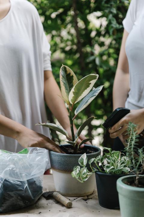 Troc de plantes |